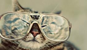 Вчені з'ясували причину популярності відеороликів з котиками