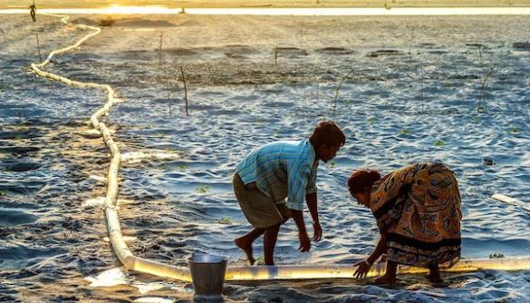 Екологічні та соціальні проблеми у фото: кращі знімки конкурсу Environmental Photographer of the Year