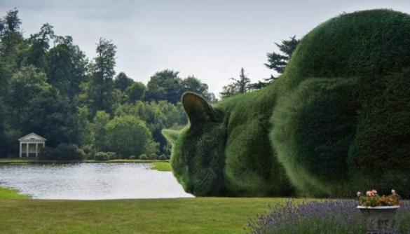 Коти-кущі британського художника підкорюють соцмережі