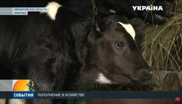 Канал «Україна» втратив гідність у піарі Олега Ляшка