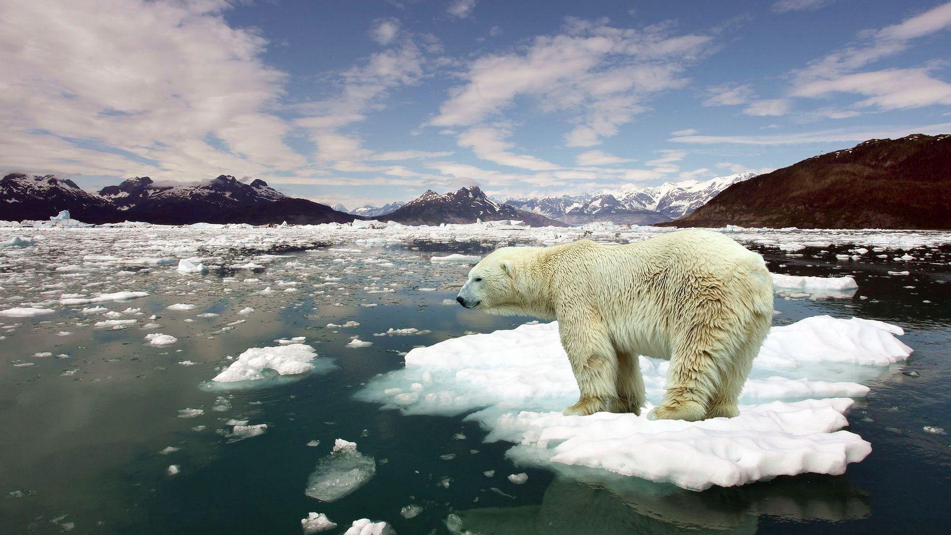 Де шукати правду про зміну клімату: три фактчекінгових проекти