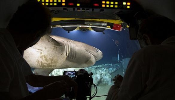 Субмарину зі знімальною групою BBC атакували акули
