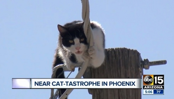 Американські журналісти півтори години транслювали порятунок кішки