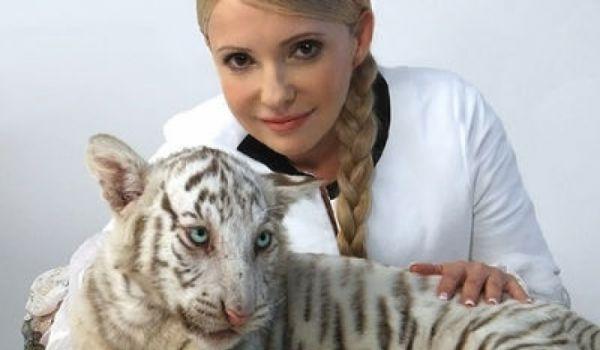 Прямий канал повідомив про смерть тигриці Тимошенко. Зоопарк спростовує