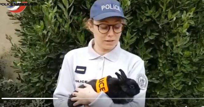 Французька поліція у Twitter повідомила, що братиме на службу кроликів. Це був жарт