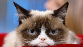 Померла кішка, яка мала 2,4 млн підписників у Instagram