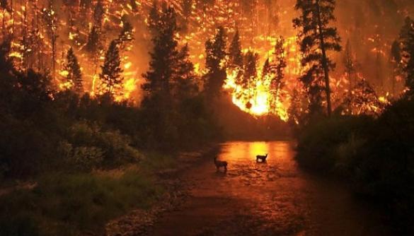 Пожежі в Сибіру: у соцмережах поширюють не ті фото