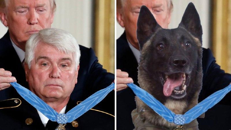 Трамп опублікував фейкове фото нагородження собаки, який допоміг знищити лідера ІДІЛ