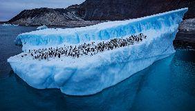У «Вікіпедії» акція до 200-річчя відкриття Антарктиди