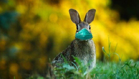 «Кабмін заборонив святкувати Великдень»: в мережі — нова маніпуляція