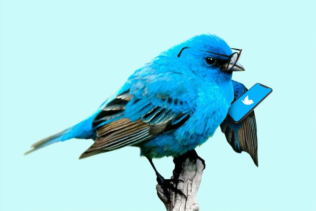 Twitter розглядає можливість платної підписки. Які нові функції можуть з'явитись?