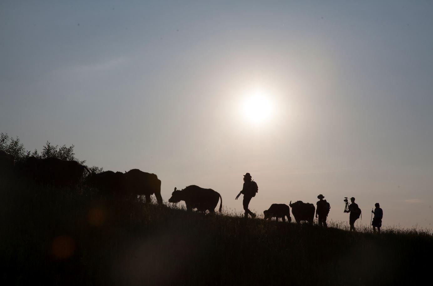 «Май далеко — май добре». Як за гроші, зібрані на «Спільнокошті», зняти кіно про любов, буйволів та свободу