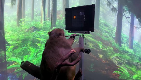 Компанія Ілона Маска навчила мавпу грати у відеогру силою думки