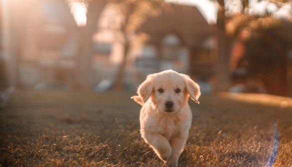 У США розробили додаток для пошуку загублених собак за формою носа